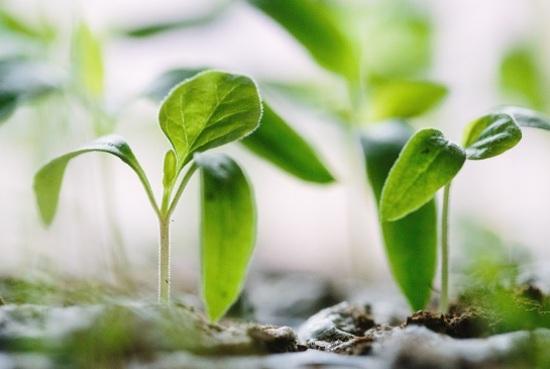Aprendizaje de las plantas
