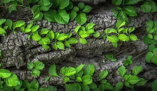 Inteligencia de las plantas