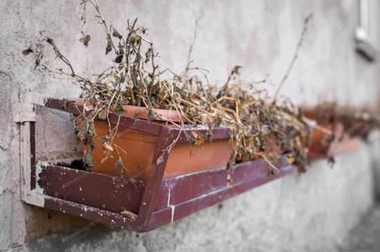 plantas muertas y la mala suerte